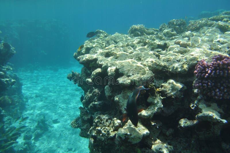Rotes Meer -5 lizenzfreies stockfoto