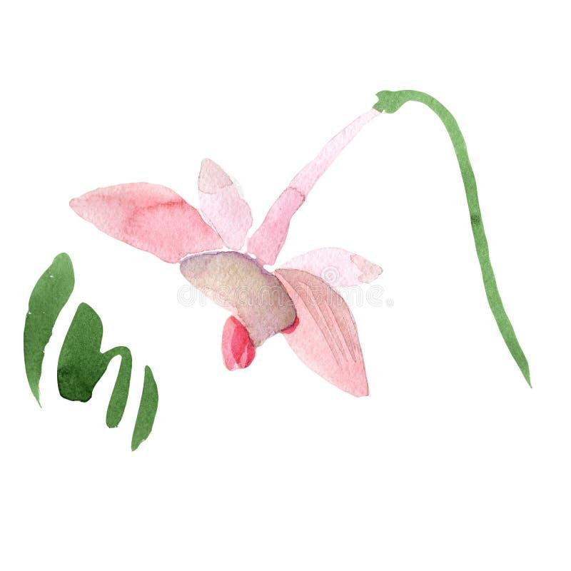Rotes Orchidee wanda Botanische mit Blumenblume Wilder Federblatt Wildflower lokalisiert vektor abbildung