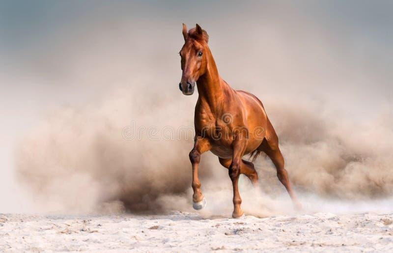 Rotes Pferd in der Wüste lizenzfreies stockfoto