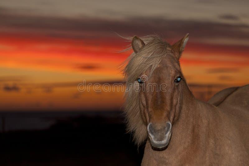 Rotes Pferd II lizenzfreies stockfoto