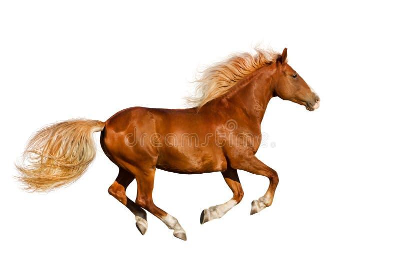 Rotes Pferd lokalisiert stockbild