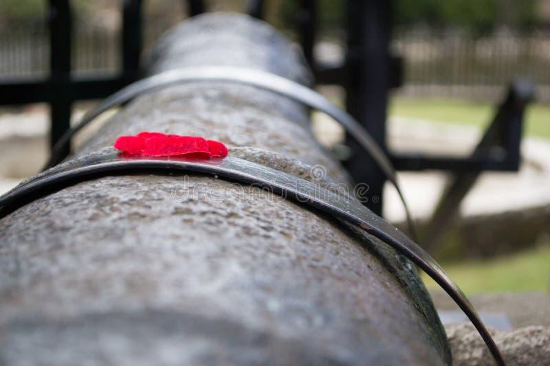 Rotes Poppy On Old World War-Kanonen-Gewehr stockfotografie