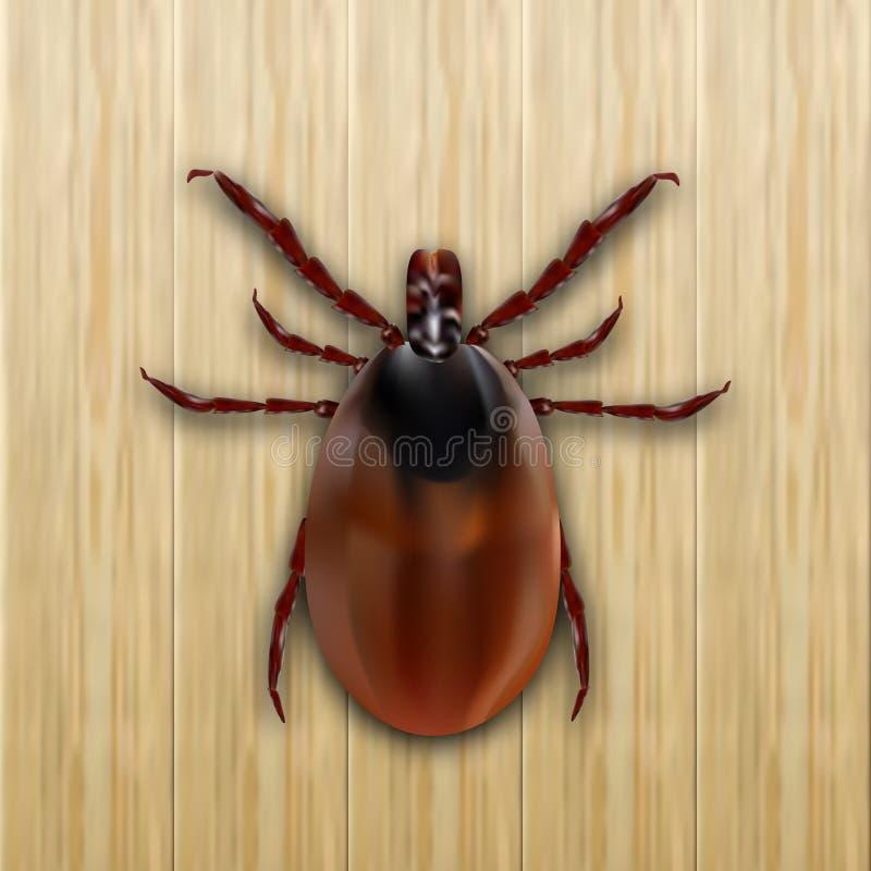 Rotes Scherflein Milbenallergie epidemie Milbenparasiten Auf einem hölzernen Hintergrund Abbildung stock abbildung