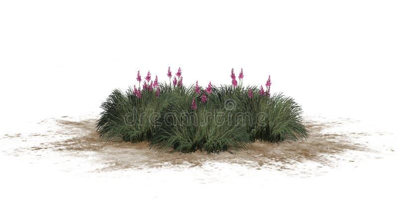 Rotes Yucca auf einem Sand erea - lokalisiert auf weißem Hintergrund stockfotos
