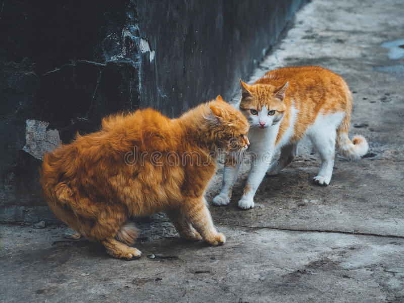 Rothaarige Katze lizenzfreie stockfotos