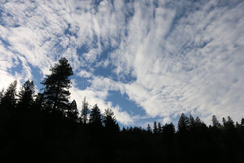 Rotholz-Himmel lizenzfreie stockbilder