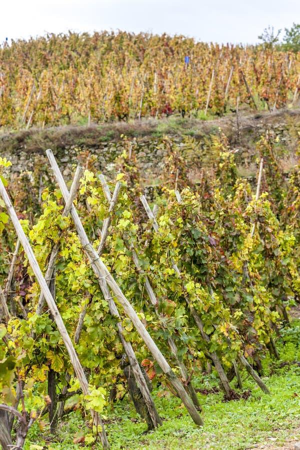 rotie de la France le Rhône de petite ferme d'alpes photo stock