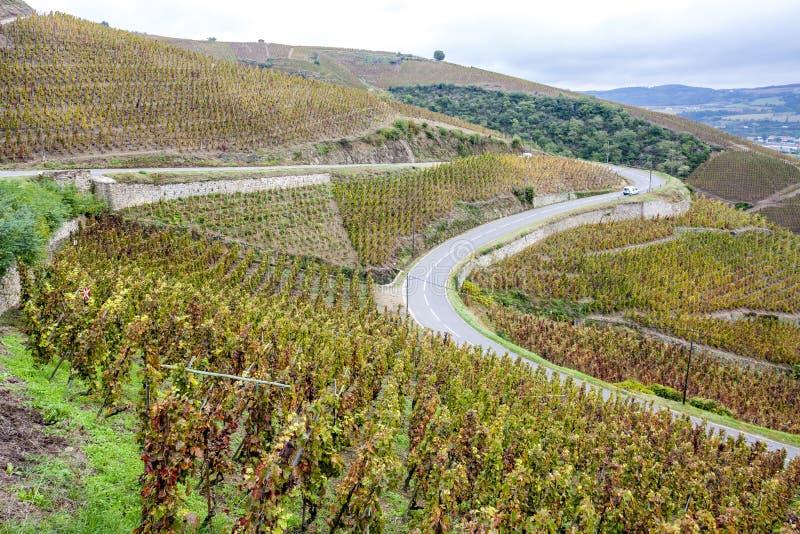 rotie de la France le Rhône de petite ferme d'alpes image stock