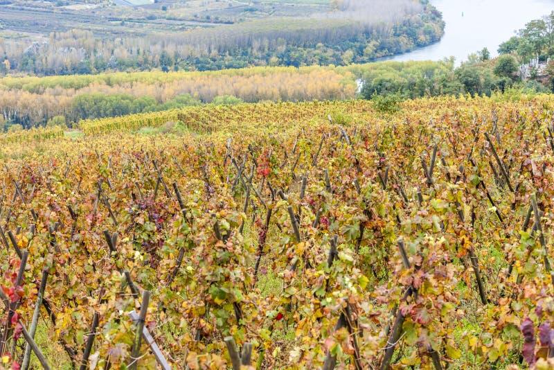 rotie de la France le Rhône de petite ferme d'alpes photos libres de droits