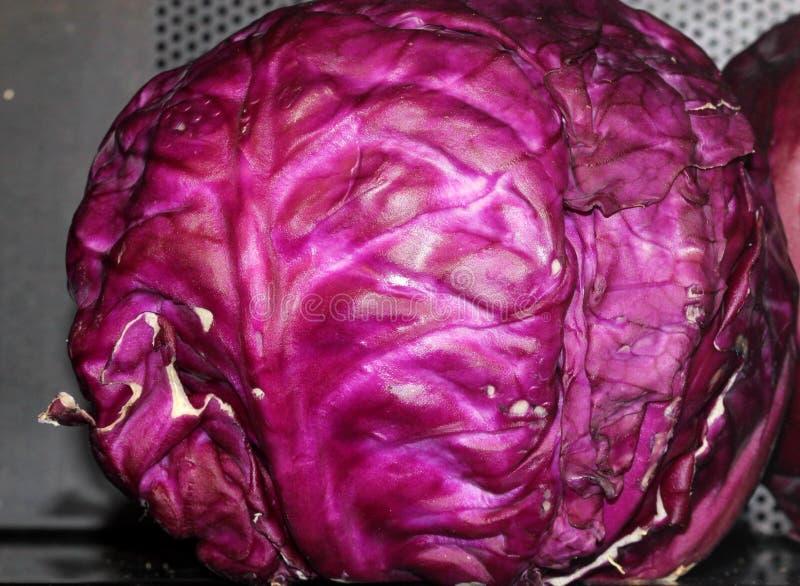 Rotkohl, Brassica Oleracea var capitata, stockbilder