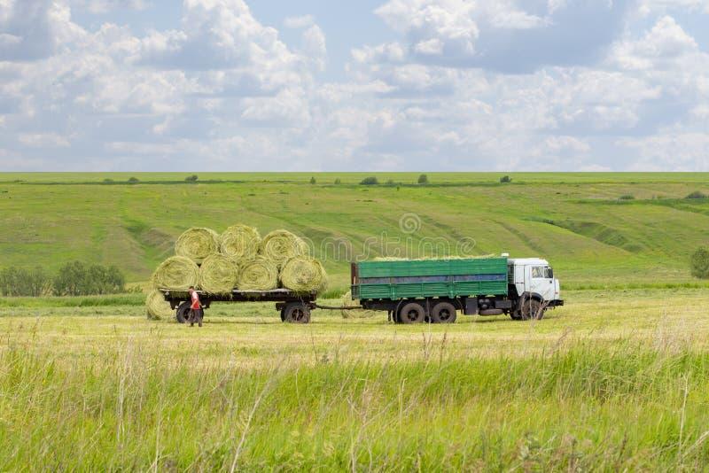Rotoli di carico del fieno in un rimorchio agricolo del camion Preparazione di alimentazione per gli animali da allevamento, fien immagine stock libera da diritti