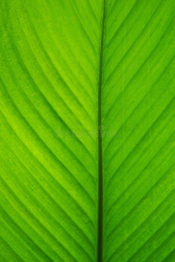 Rotoli verdi della foglia Astrazione Fondo immagini stock