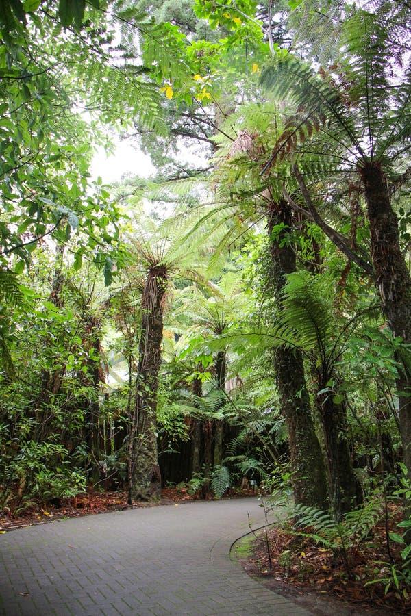Rotorua Nya Zeeland NZ, 12 April, 2014; Undersökning av redwoodträdskogen på regnbågevårar, Rotorua royaltyfri fotografi