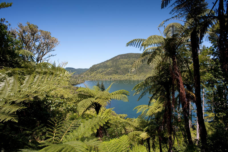Rotorua See-Bezirk stockbild