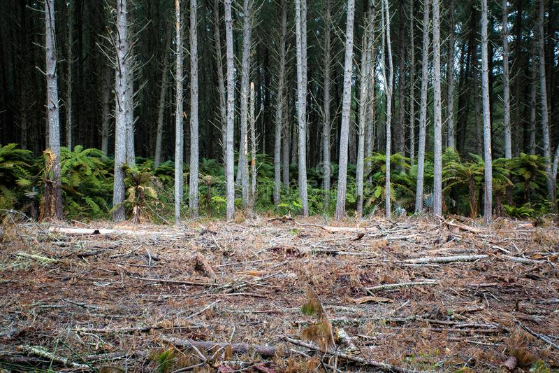 Rotorua tiene muchos bosques de trabajo activos imágenes de archivo libres de regalías