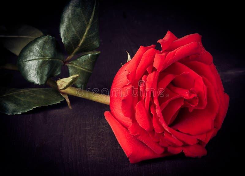 Rotrose auf altem Holz, im altem Stil, Valentinstag und Liebeskonzept stockbild