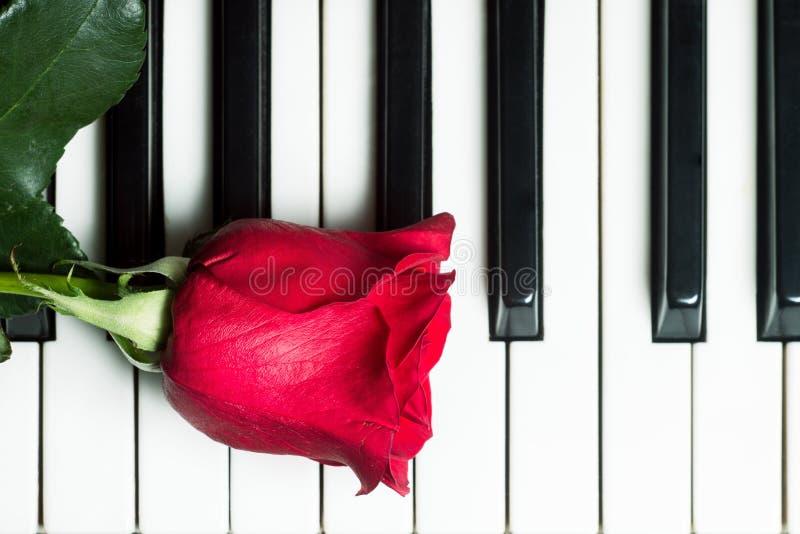 Rotrose auf Klaviertastatur Abstrakter Musikhintergrund lizenzfreie stockbilder