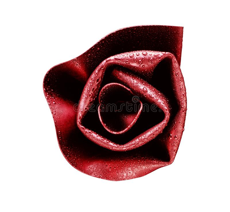 Rotrose bedeckt mit Tau lizenzfreies stockbild