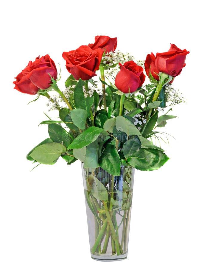 Rotrose blüht in einem transparenten Vase, Grünblätter, Abschluss oben, der weiße Hintergrund, lokalisiert lizenzfreie stockfotografie