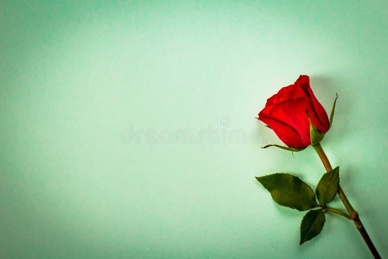 Rotrose in der Weinleseart Romantischer Blumenhintergrund stockbild