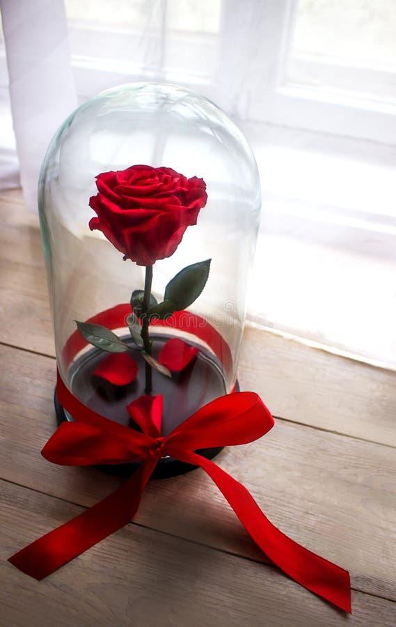 Rotrose in einer Flasche unter dem Glas Als Geschenk für den Feiertag stockfotografie