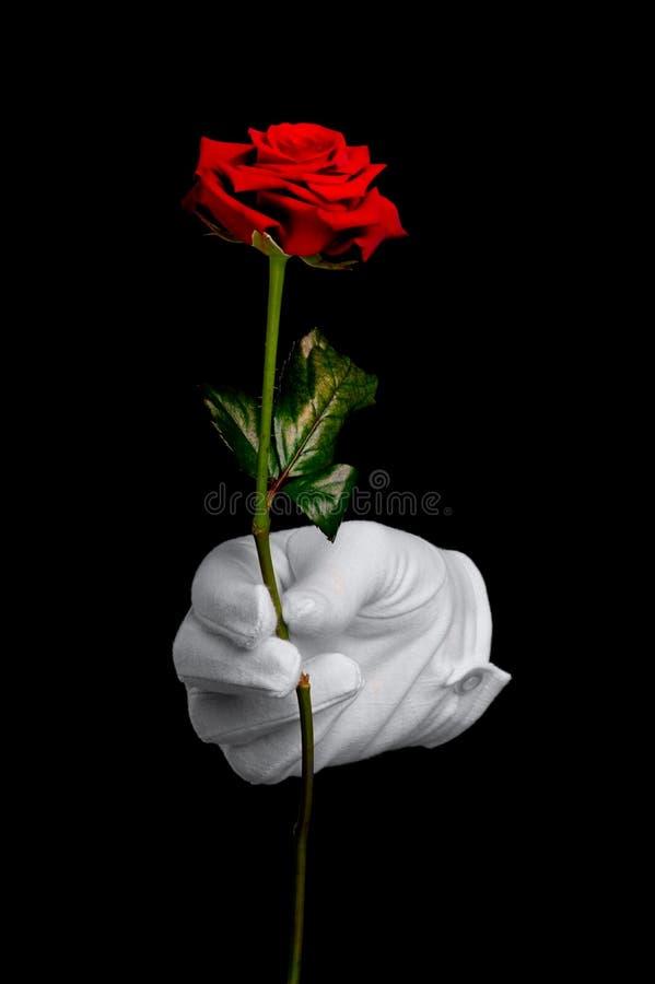 Rotrose und weißer Handschuh stockfotografie