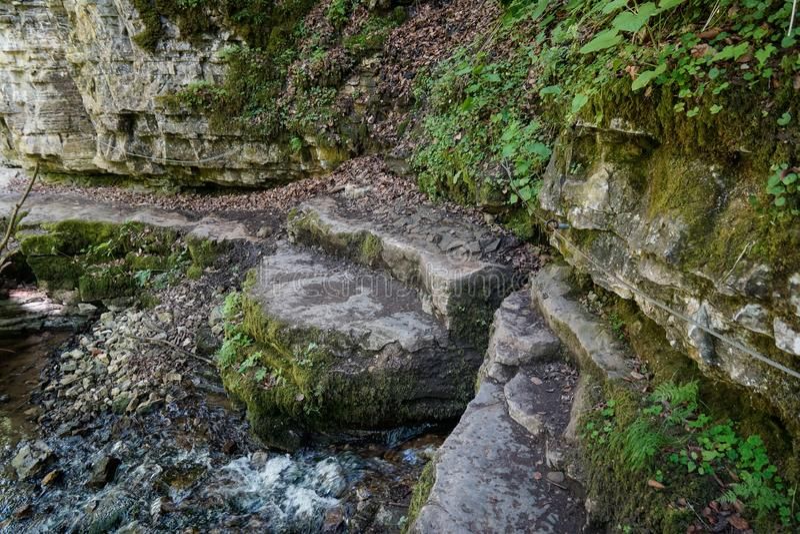 Rots aan rivierkant van de mooie stijging van de wutachcanion stock afbeelding