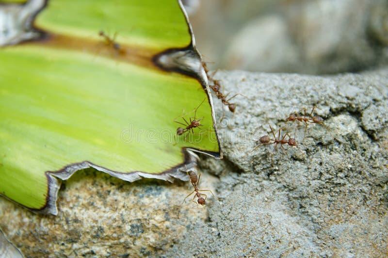 Rots, blad en een mier stock afbeeldingen