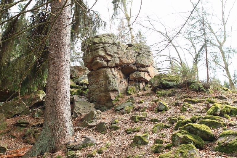 Rots in bos op Grote Blanik royalty-vrije stock foto's