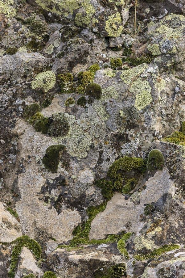 Rots die met mos en korstmos wordt behandeld stock afbeelding