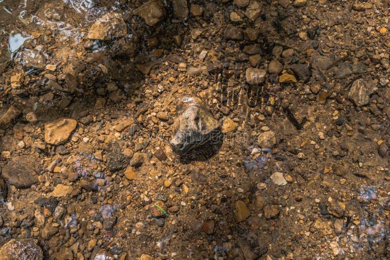 Rots die in Rivierwater leggen royalty-vrije stock afbeelding