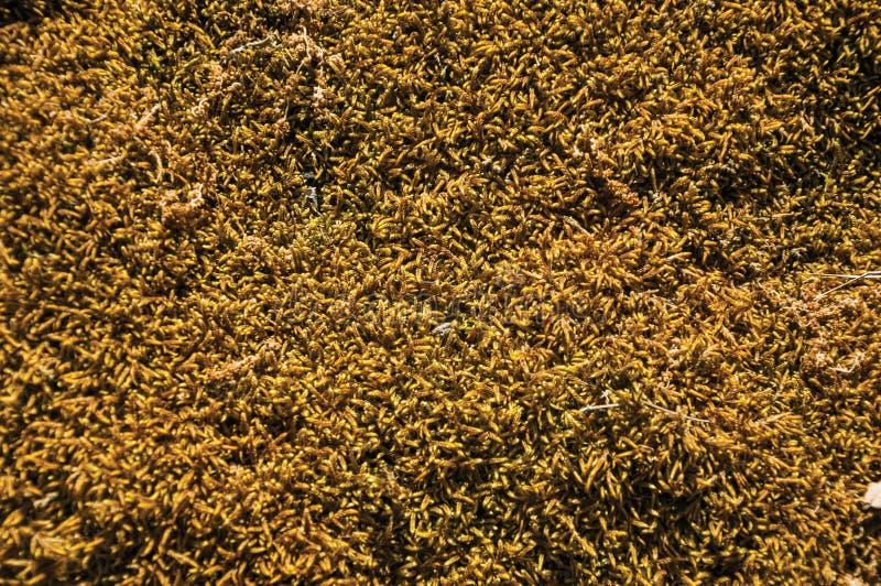 Rots door droge mos en korstmossen wordt behandeld dat stock fotografie