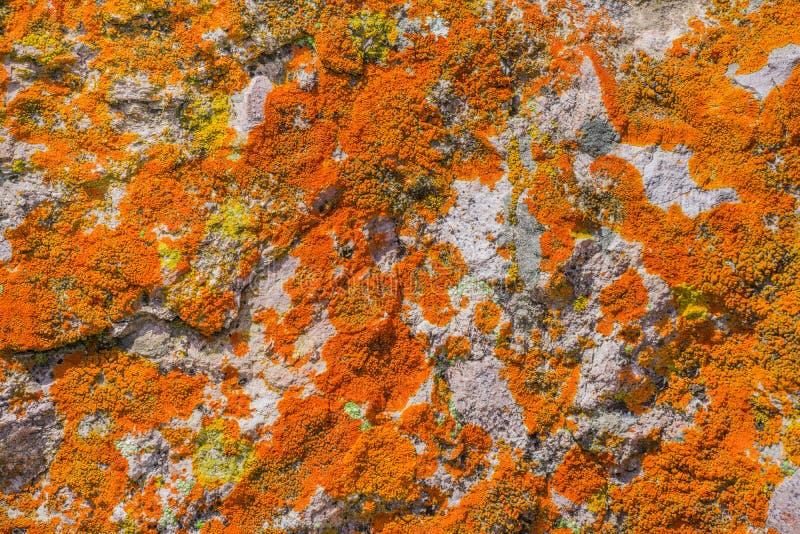 Rots in levendig oranje mos, Toppen Nationaal Park, Californië wordt behandeld dat royalty-vrije stock afbeelding