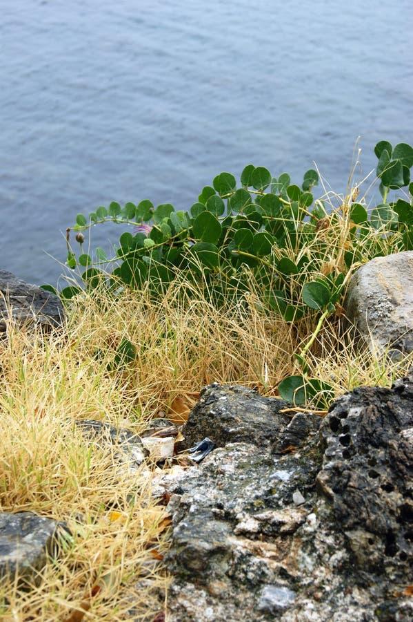 Rots met de herfstgras op de kust stock foto's