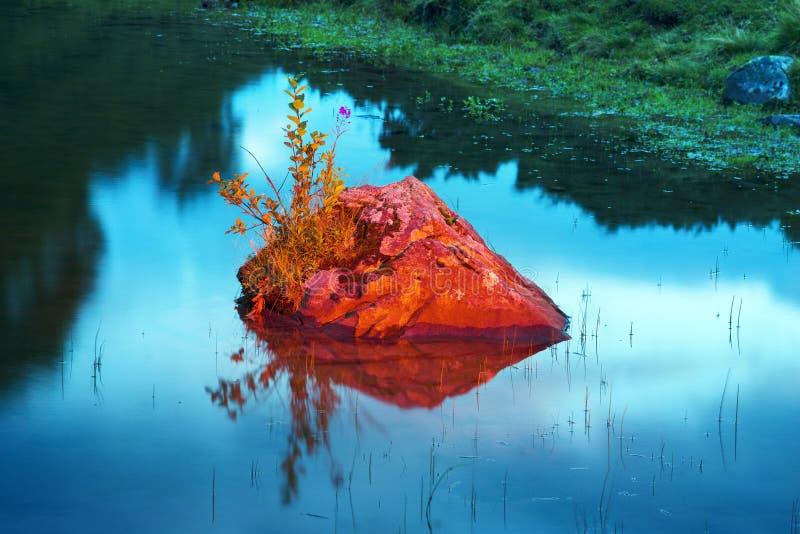 Rots met een bloem in het meer royalty-vrije stock fotografie