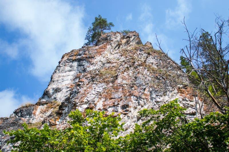Rots met een boom op bovenkant tegen de blauwe hemel royalty-vrije stock afbeelding