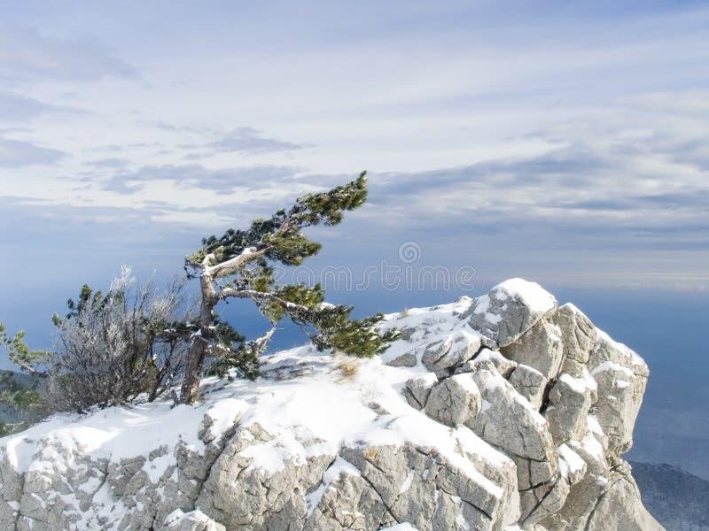 Rots met een eenzame pijnboom in bergen in de Krim royalty-vrije stock foto
