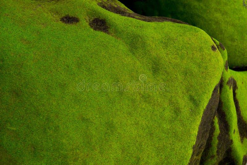 Rots met mos op groen kustmos stock foto's