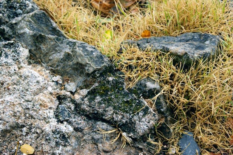 Rots, met vergeeld die gras wordt overwoekerd stock afbeelding