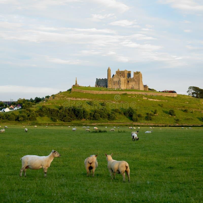 Rots van Cashel royalty-vrije stock fotografie
