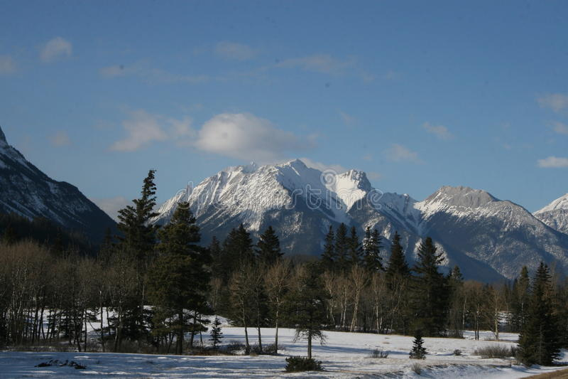 Rotsachtig bergen en bos stock foto's