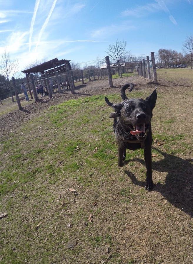 Rotsachtig bij het hondpark stock fotografie