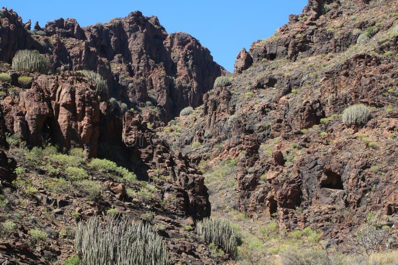 Rotsachtig dor landschap met cactus van de Canarische bergen van Gran in Spanje stock fotografie
