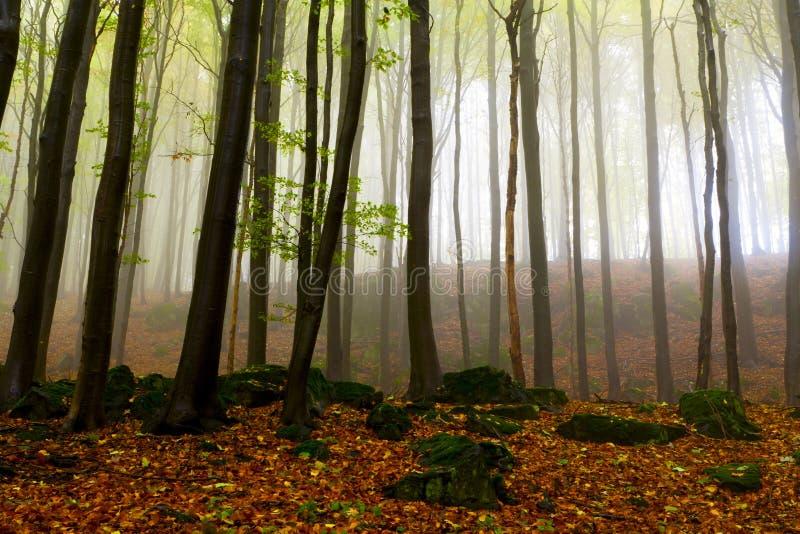Rotsachtige hellingen, de mooie de herfstbomen. stock foto's