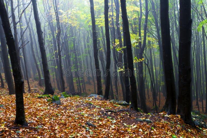 Rotsachtige hellingen, de mooie de herfstbomen. stock afbeelding