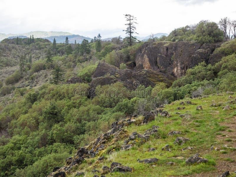 Rotsachtige klip met mos en bomen stock afbeelding