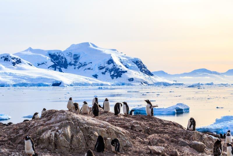 Rotsachtige kustlijn die door gentoo pengins en gletsjer met I wordt overladen royalty-vrije stock foto