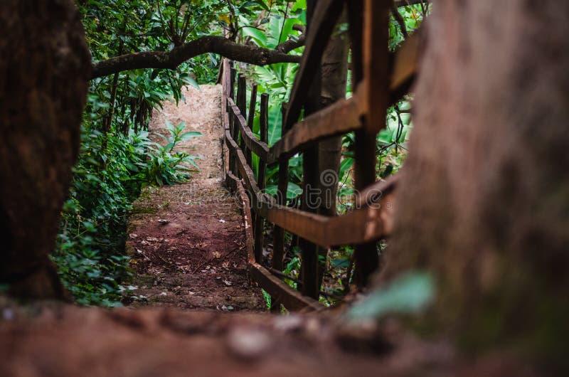 Rotsachtige stappen - onderaan een bos stock foto