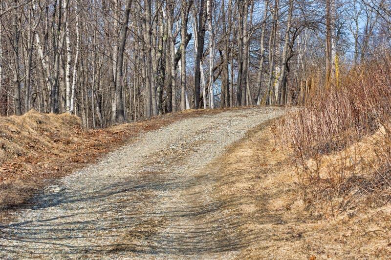 Rotsachtige weg met bomen en dood gebladerte stock foto's
