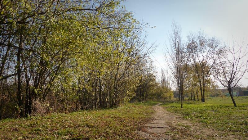 Rotsachtige wegweg door de bomen stock afbeelding